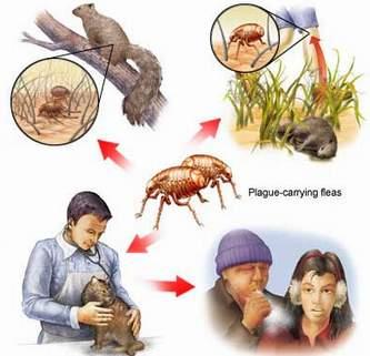 Bệnh dịch hạch (Pestis)